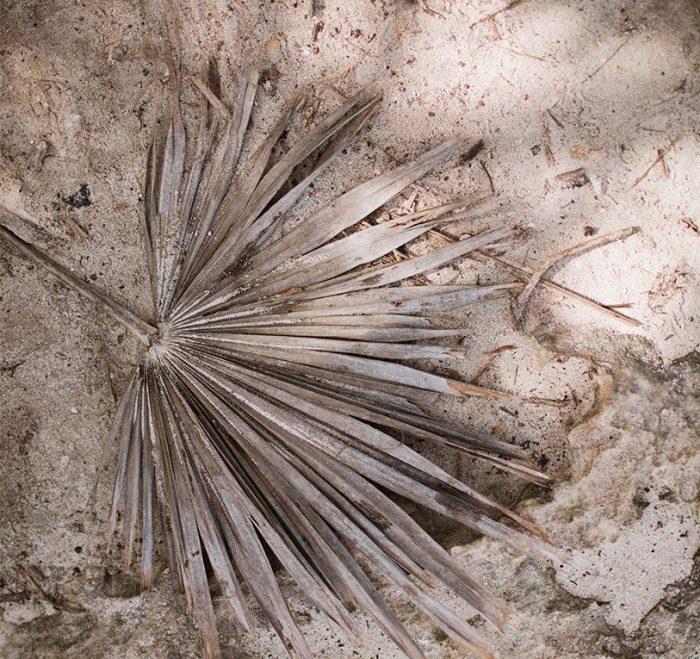 palm leaf in sand